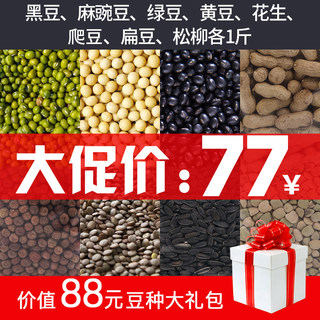 Towelo Site Bean sprouts special bean seed eco-bean seed mung bean sprout sprouts non-transgenic no pesticide fertilizer