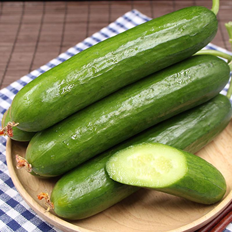 【逗嘴鼠】5斤山东特产水果黄瓜