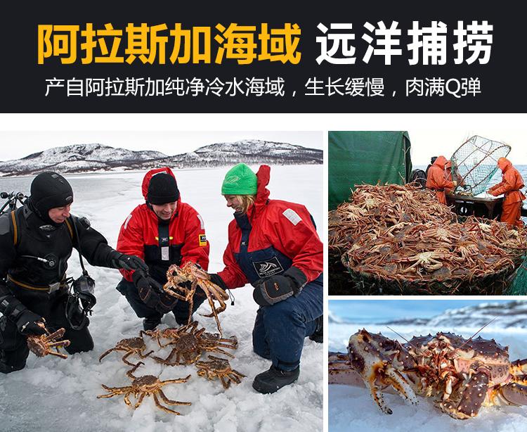 新鲜帝王蟹海鲜水产鲜活冷冻进口超特大龙虾面包皇帝螃蟹斤详细照片