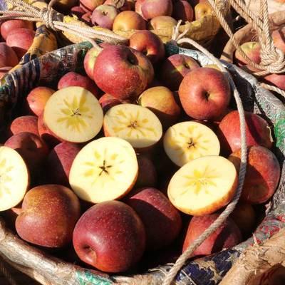 四川大凉山冰糖心丑苹果10斤