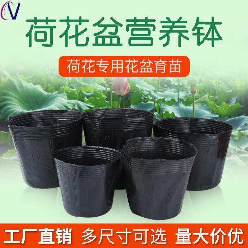 新荷花盆营养钵睡莲盆水生植物盆加厚无孔塑料碗莲盆育苗杯营养杯