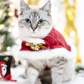 Китти новый год рождество одежда наряд собака тедди молодой кот английский короткий рождество плащ нагрудник шляпа головной убор плащ, цена 255 руб