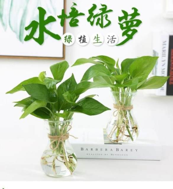 Transparent glass bottle flower arrangement green lotus fresh aquaculture indoor home small vase gardening trumpet hyacinth creative small