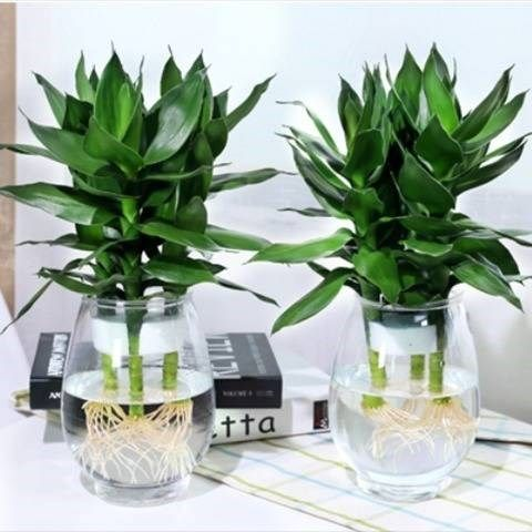 Plastic transparent waterper rich bamboo vase fish tank flower pot home gardening home office hotel shopping mall