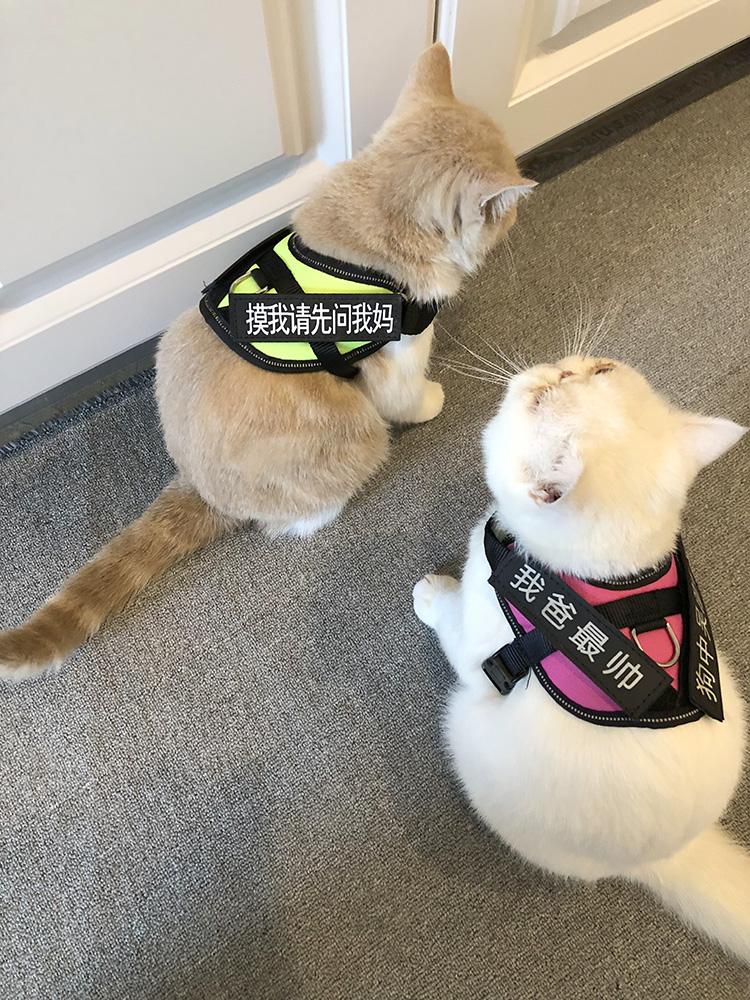 Đặc biệt cho dây mèo, dây kéo mèo, mèo ngắn Anh có thể điều chỉnh, áo vest dễ thương, dây đeo mèo và chống đứt - Cat / Dog hàng ngày Neccessities