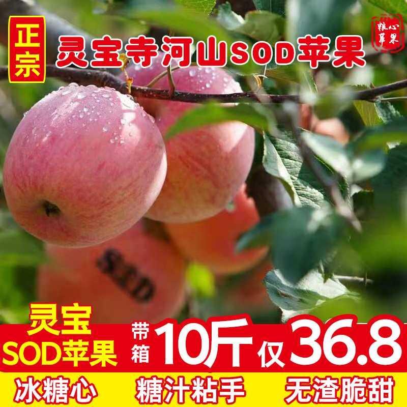 灵宝寺河山sod苹果冰糖心河南红富士新鲜非阿克苏【无SOD标志】