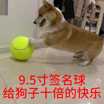 Мячики теннисные,  9.5 дюймовый нет сети мяч газированный широкая сеть мяч домашнее животное игрушка мяч газированный игрушка собака десять время счастливый теннис, цена 328 руб