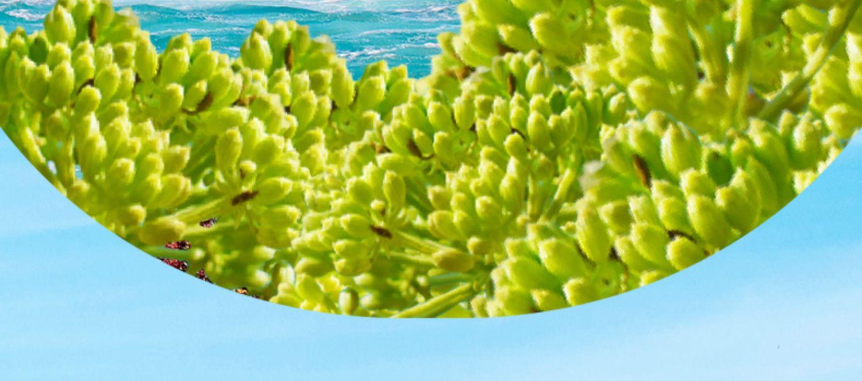 PMPM海茴香乳糖酸修护水乳套装3