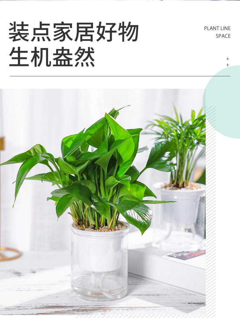 盆栽室内新房净化空气好养水培花卉