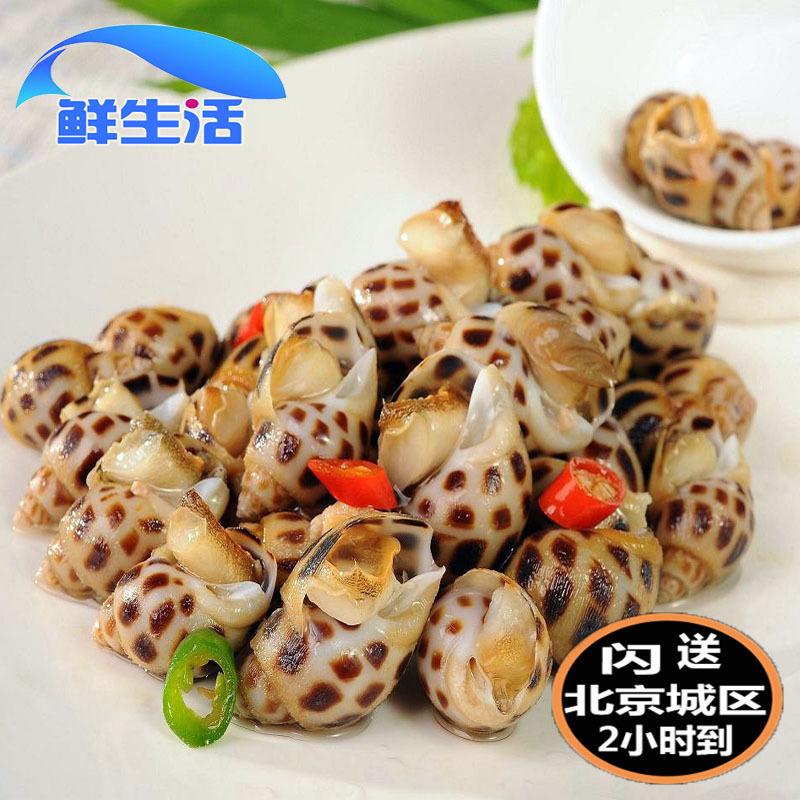 鲜v贝类500g新鲜东风鲜活贝类海螺花螺螺水产南风螺海猪海鲜