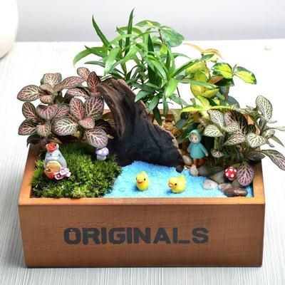 苔藓微景观办公室盆栽绿植生态瓶植物盆栽室内花卉创意diy礼物
