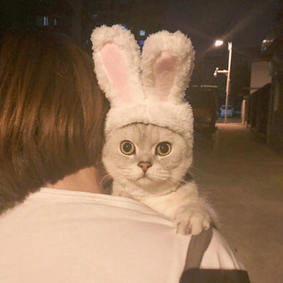 Cute Bunny Headgear Cat Headgear Transformation Cat Headdress Dog Headgear Pet Hat Teddy Bunny Ears