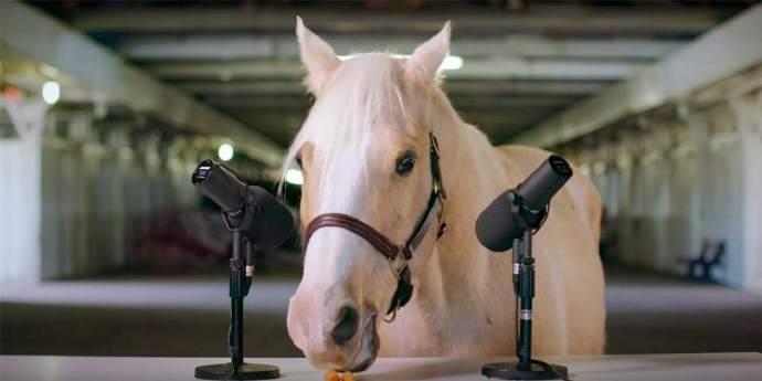 放松一下,享受来自国外列克星敦旅游公司的这匹马的asmr