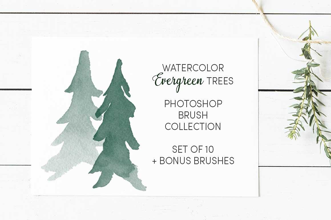 13个水彩常绿树(圣诞松树)笔刷集合设计素材模板