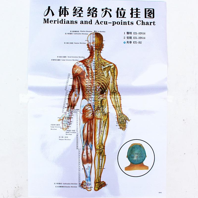 3/7 stücke Körper akupunktur punkte diagramm/menschliche meridian ...
