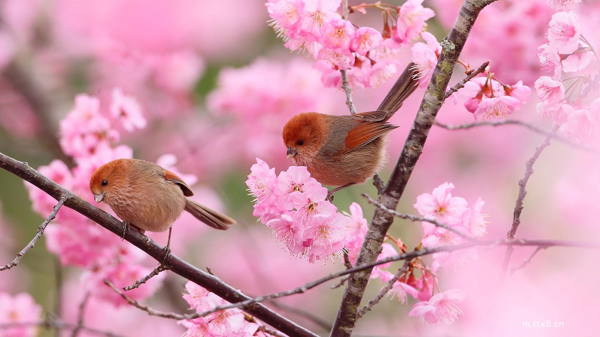 可爱鸟儿与风景融为一体的高清桌面壁纸