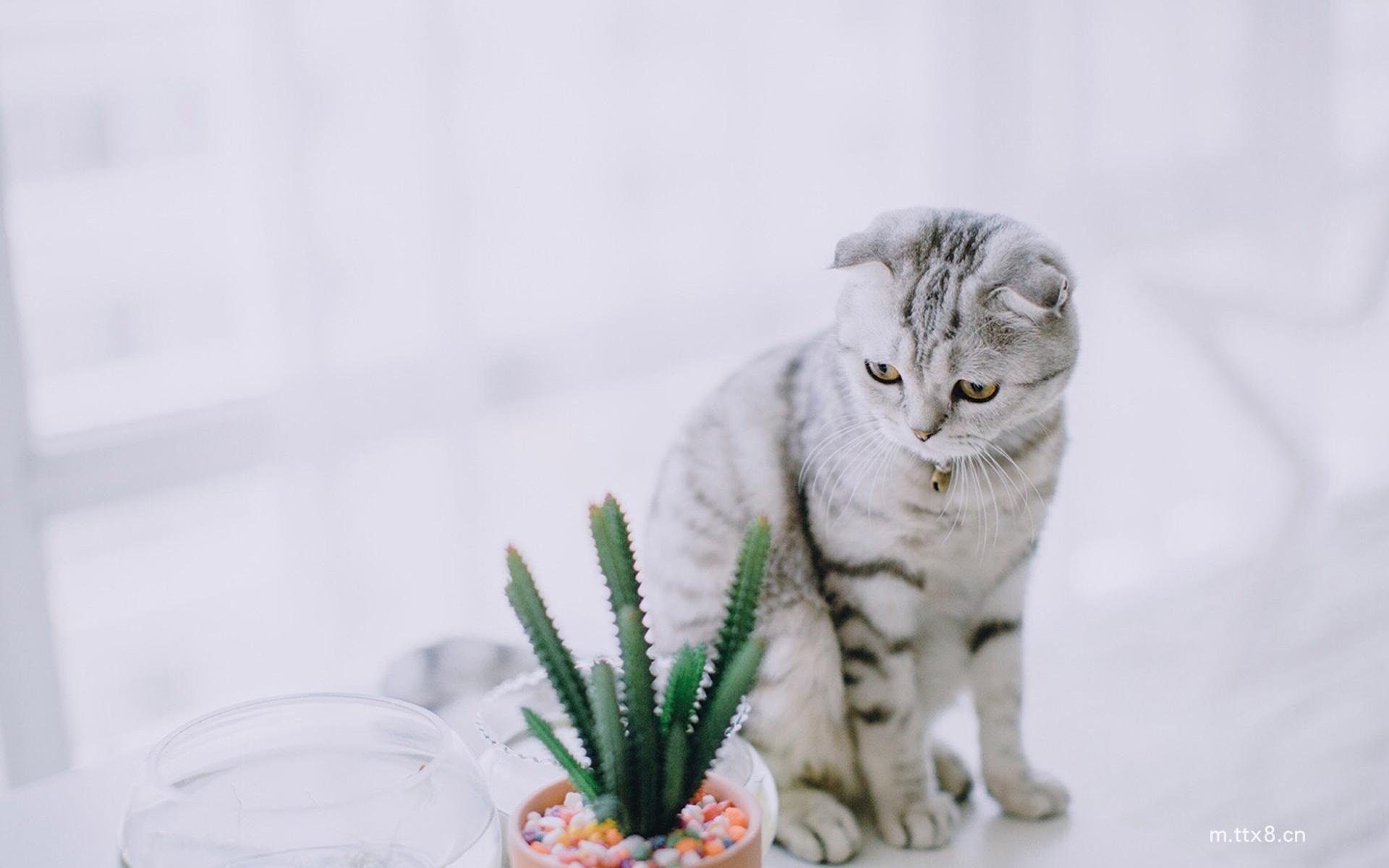 可爱网红猫咪高清大图桌面壁纸