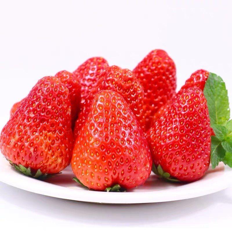 正宗丹东草莓新鲜应季现摘现发草莓2斤包邮红颜草莓