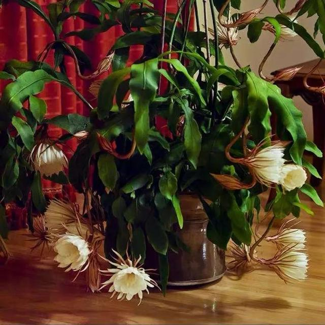 我国十大香花,家里养一盆,满室生香73
