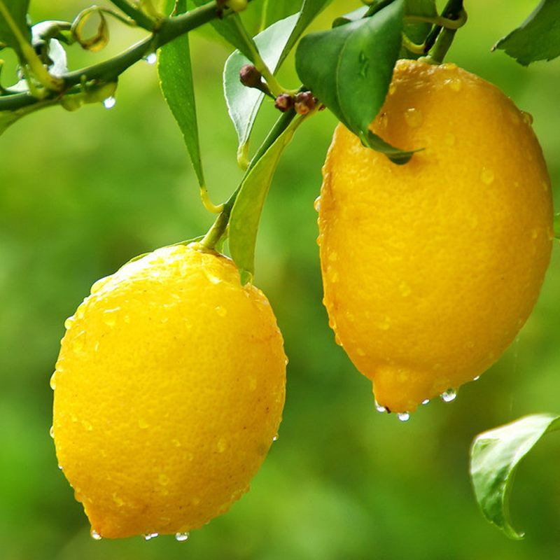 【现摘】特级超大黄柠檬5斤装