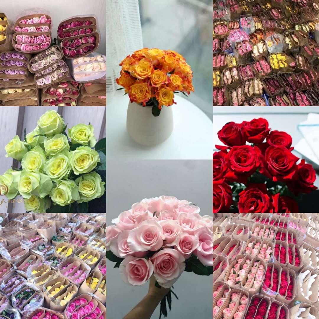 云南鲜花直发玫瑰花20支玫瑰限时抢购买一扎送一扎特价航空包邮