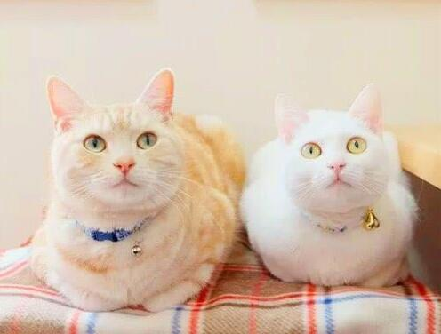 """猫咪""""母鸡蹲""""的5大原因,你知道吗"""