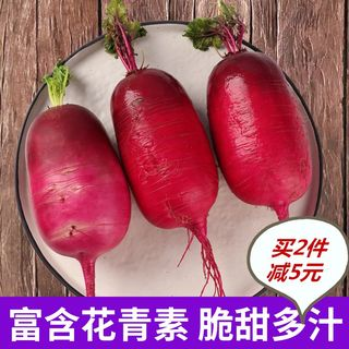 Pineapple radish purple beauty Weifang fruit radish non-shawo radish fresh vegetable salad kimchi necessary 5 kg