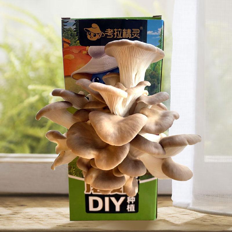 【考拉精灵】可食用diy种植蘑菇2盒装