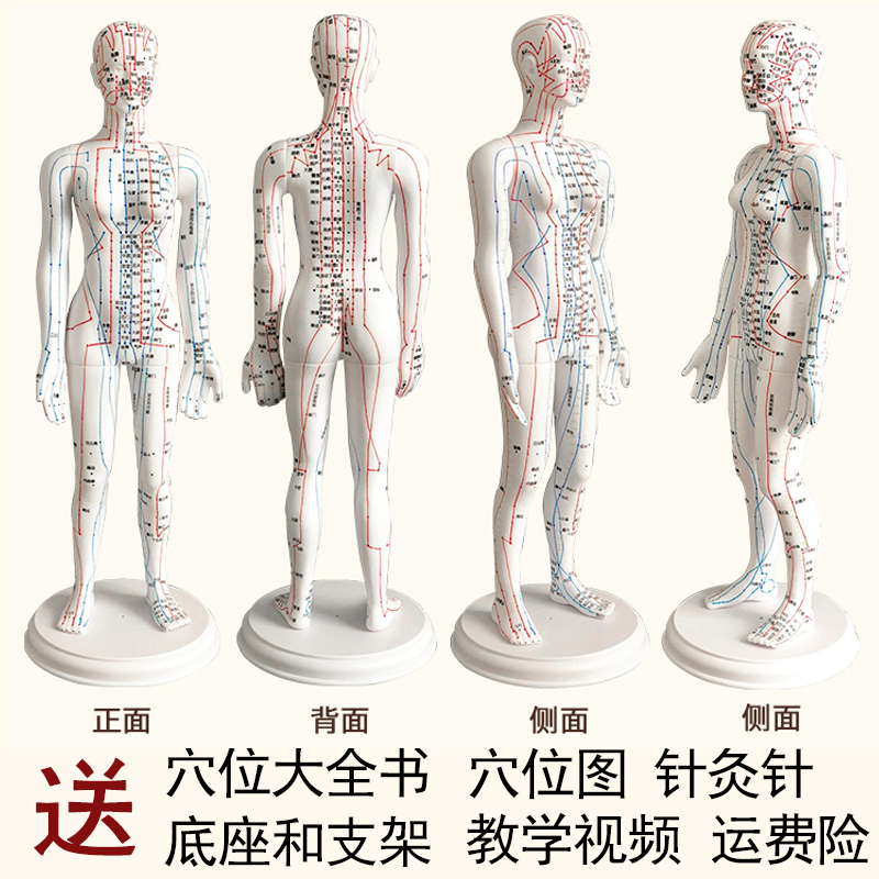 White Female Hard Mold Super Clear (hand Can Be Turned) 60cm Medical Characters