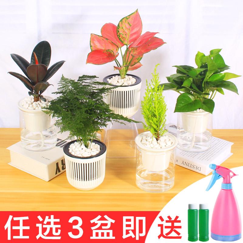 办公室内水培绿植桌面小盆栽栀子花卉吊兰竹绿萝多肉植物芦荟好养
