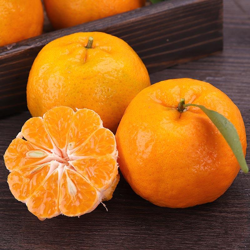 湘西新鲜水果当季芦柑包邮�崭趟崽鹚�果整箱包邮橘子现摘桔子芦柑