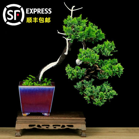 Boutique Cliffs Old Stump Bonsai Office Living Room Green Plant Plant Plant Taiwan Cliff Chase Retrieval Bonsai