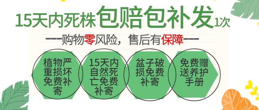 水培植物火鹤花室内办公室花卉绿植四季水生袖珍椰子桌面小植物盆栽详细照片