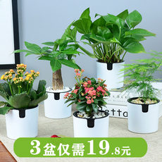 Rich tree green green green indoor flowerrich bamboo hanging orchid office table top small green plant potted hydroponic multi-meat plants