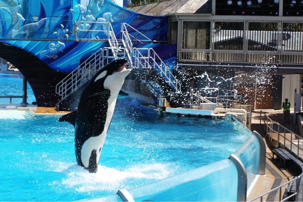 大白鲸三亚海洋探索世界