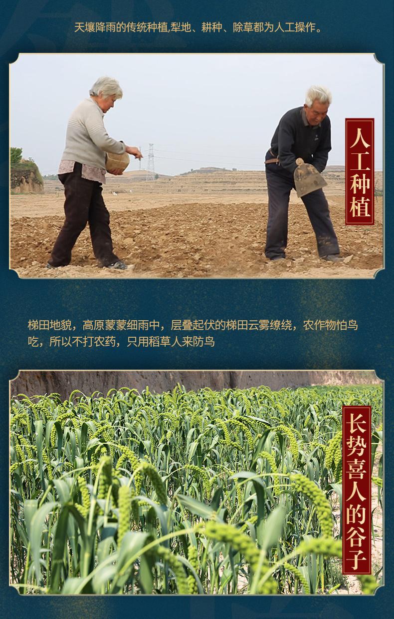 陜北小米粥黄小米新米小黄米特产新鲜粮食五谷杂粮非山西斤详细照片