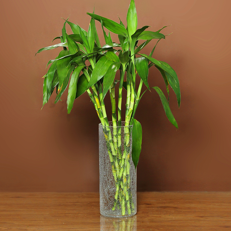 Rich Bamboo Vase Glass Transparent Household Water Bamboo Transport
