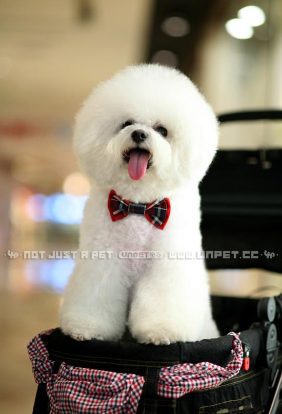 New Breguet UNPET dog British style plaid red double bow tie dress suit  wedding wild collar flower