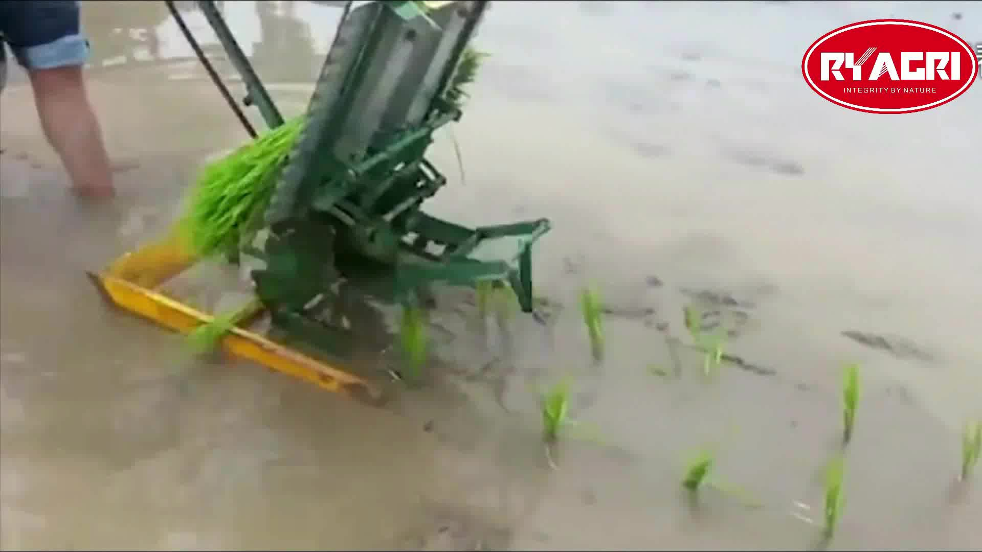 China Mini Redland Handle Type Manual Rice Transplanter For Sale In Philippines