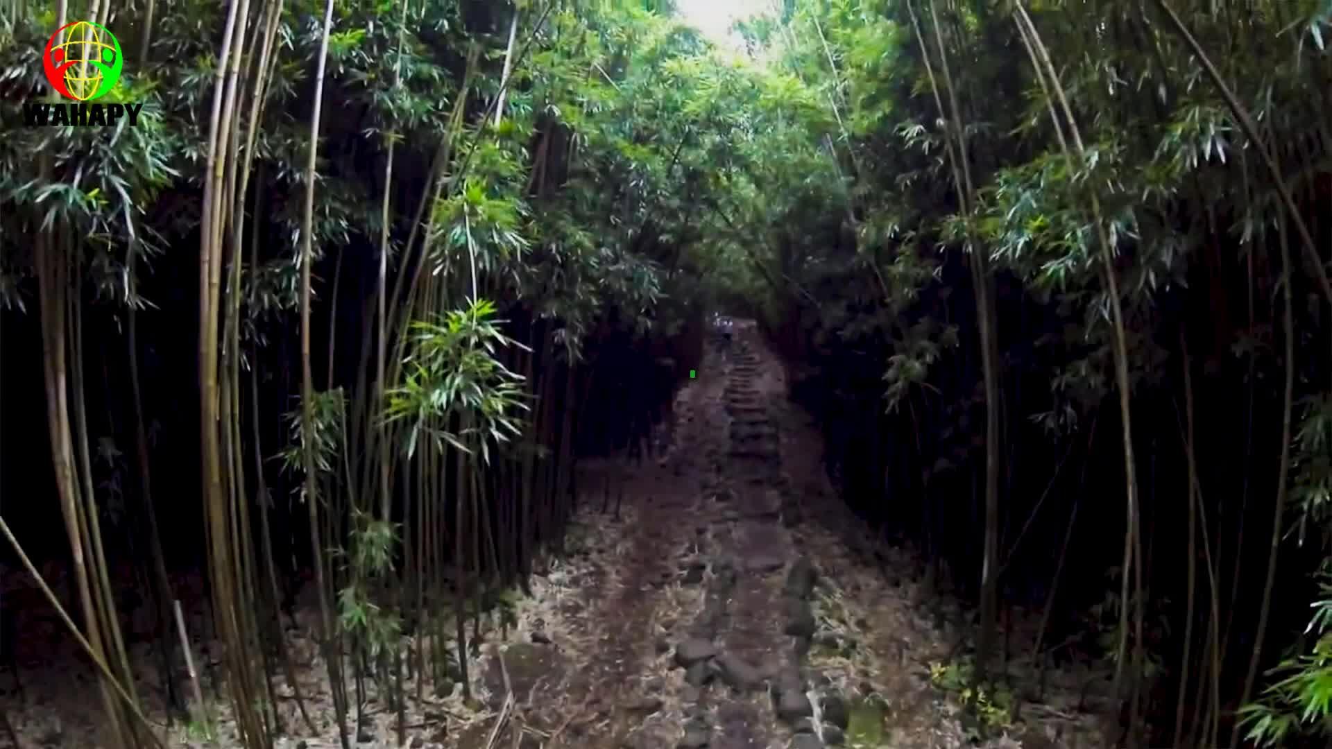 En iyi % 2020 doğal kullanımlık bambu pipet çevre dostu çevre biyobozunur yapılan Wahapy payet Vietnam