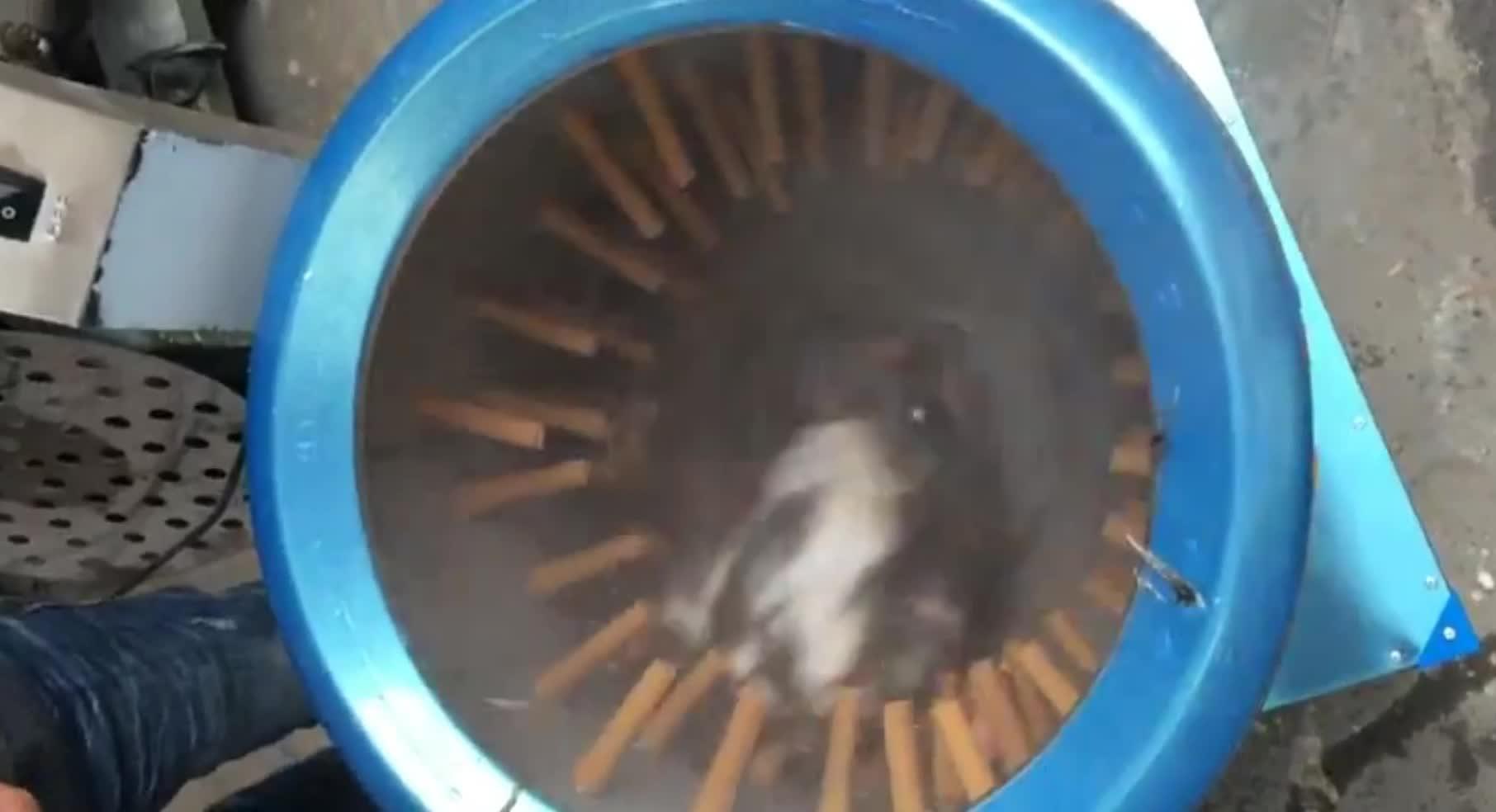Paslanmaz çelik tavuk yolma makinesi/tavuk plucker makinesi/tavuk tüy alma makinesi