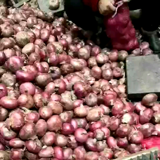 Top quality fresh red onion with competitive price to export