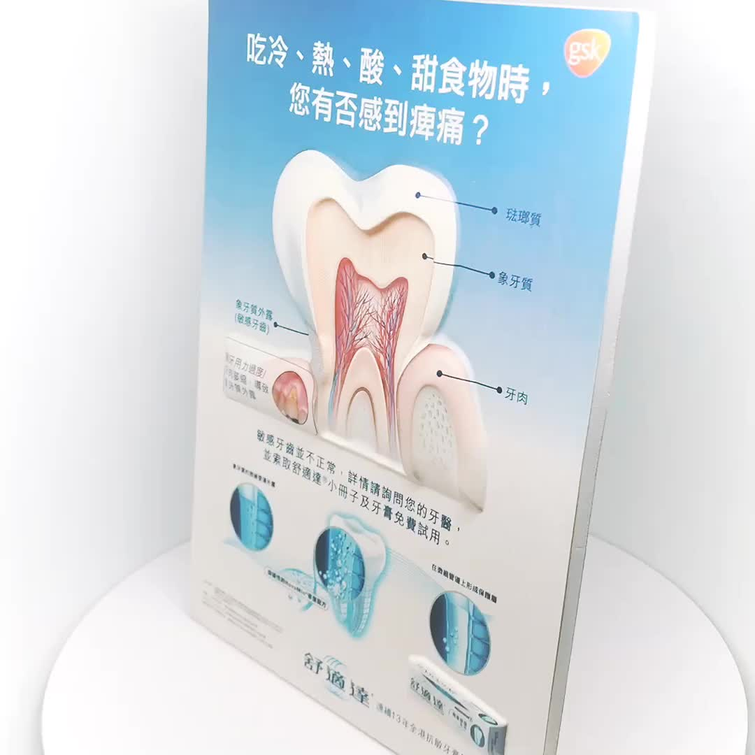 Dental Model 3D medical Chart for Demostration