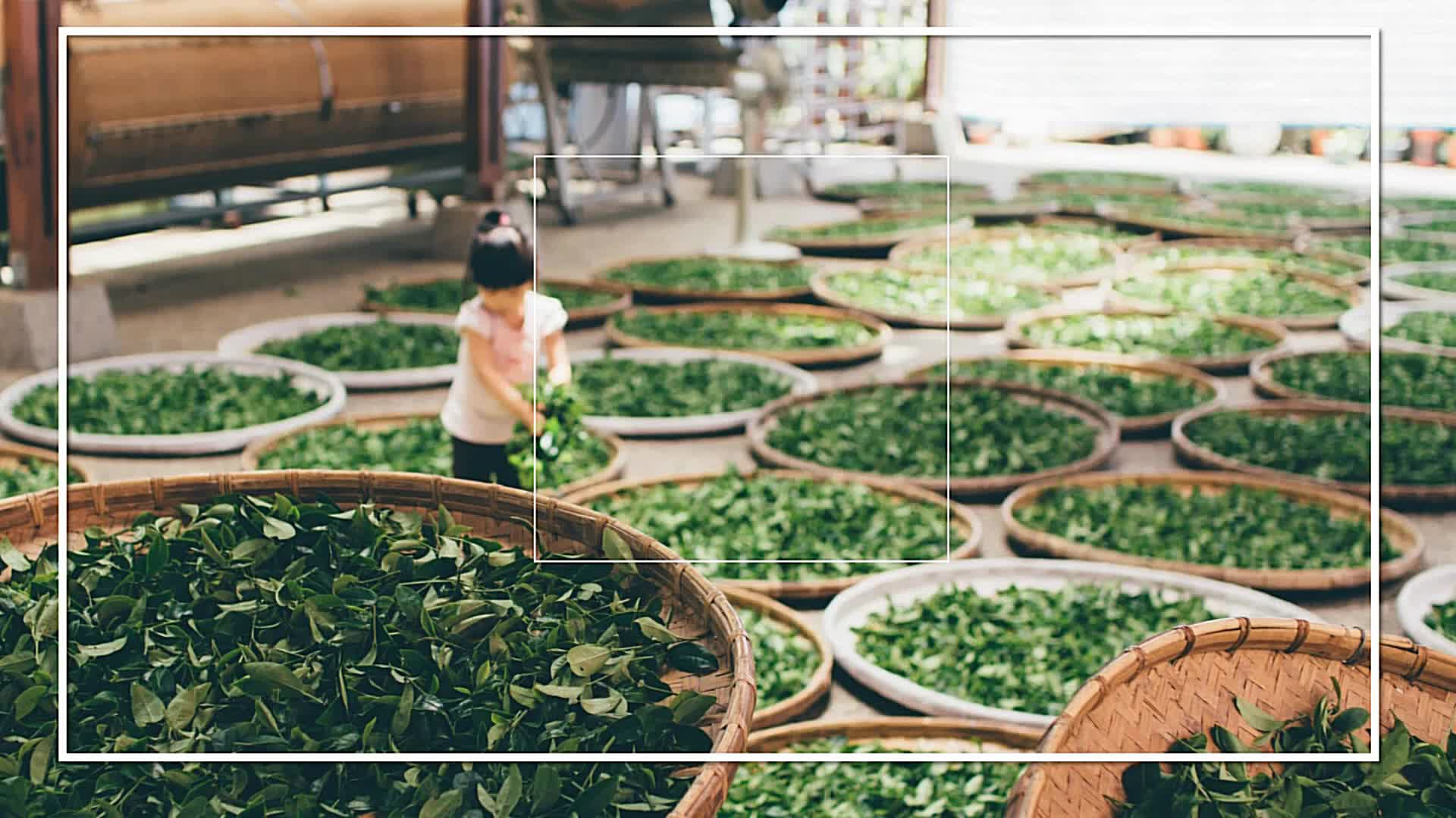Chinese High Mountain Organic Black Tea for Sale Online
