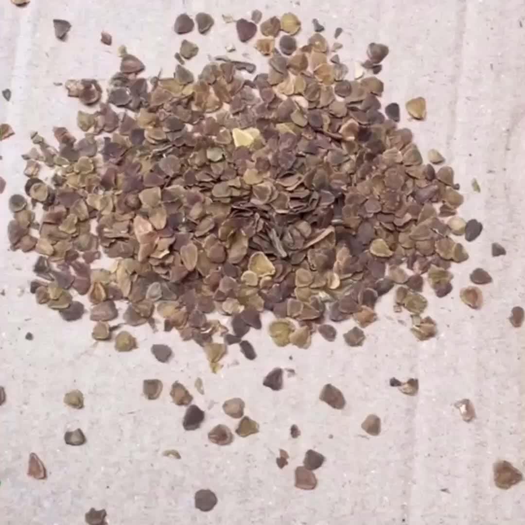 Shanghai herbario suministrar todo tipo árboles ornamentales semillas de jacaranda mimosifolia