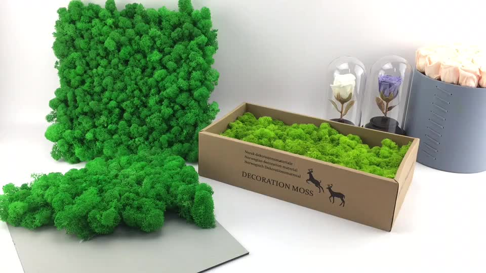 Perfect Home Accessories Decoration Home Decor  Moss  Wall Decoration Preserved Stabilized Reindeer Moss