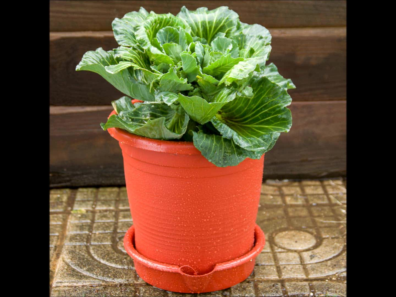 Zelf Gieter 30 CM Bloem Plastic Pot/Planter