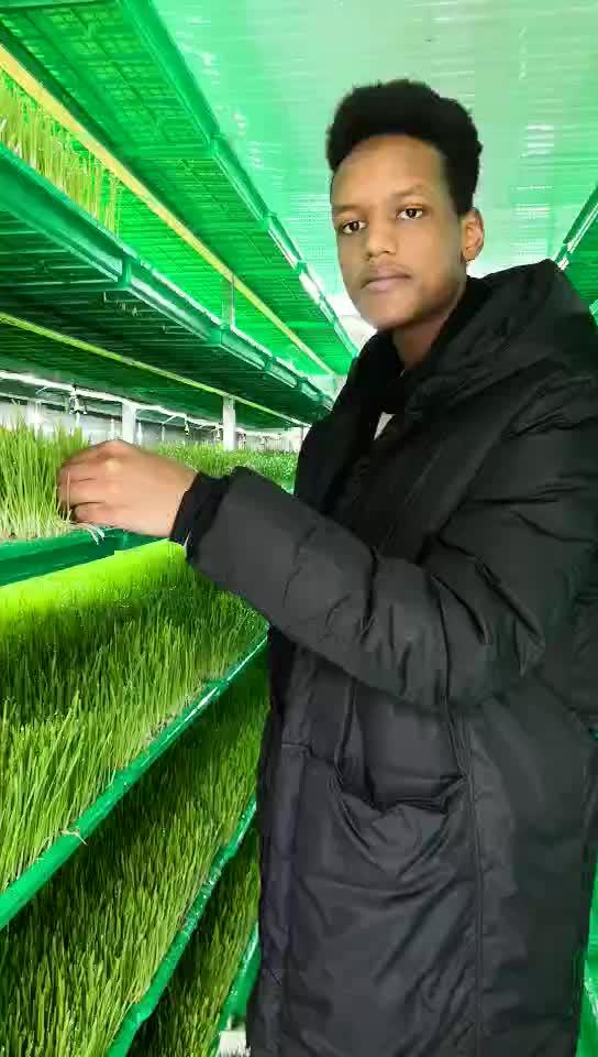 سعر المصنع التلقائي العلف الأخضر المائية آلة ل تنتشر الشعير القمح الذرة