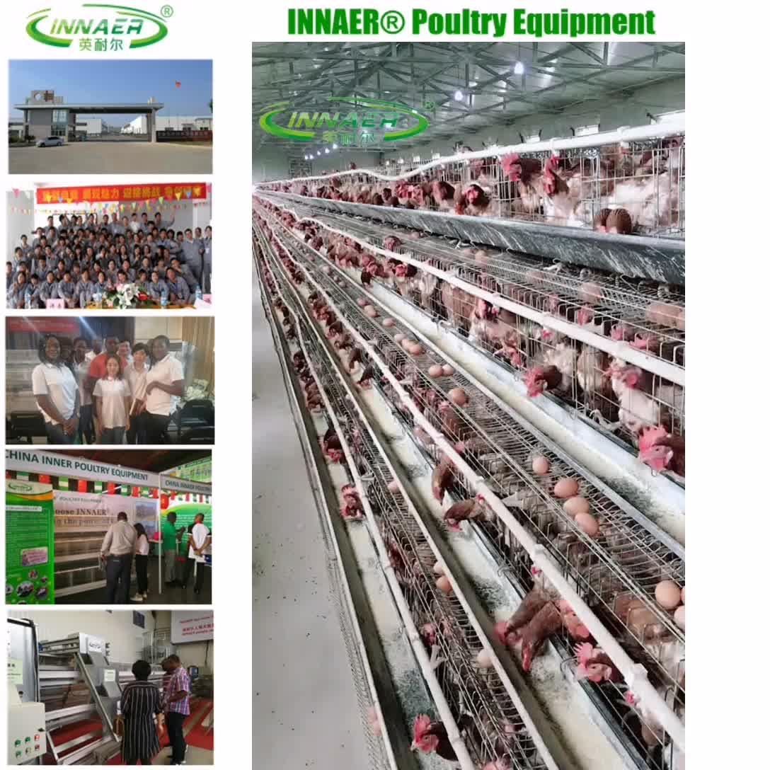 पशुपालन पोल्ट्री फार्म के लिए चिकन पिंजरे उपकरण
