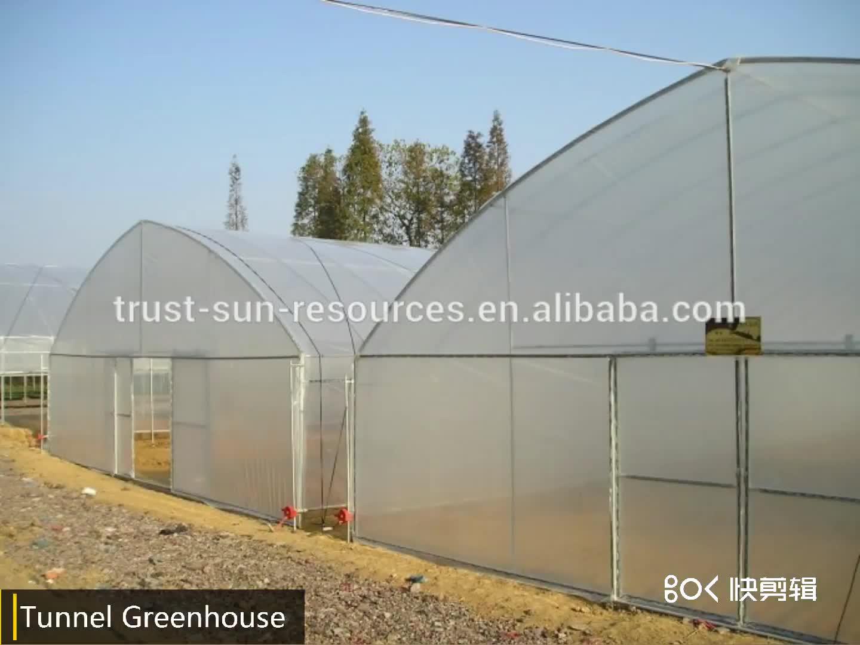 安い農業 gardentropical シングルスパン PE プラスチックフィルムトンネル温室